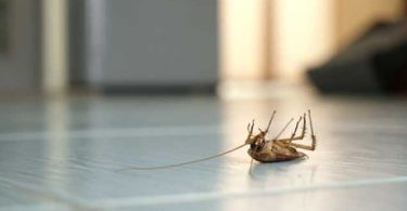 pozbycie-sie-karalucha